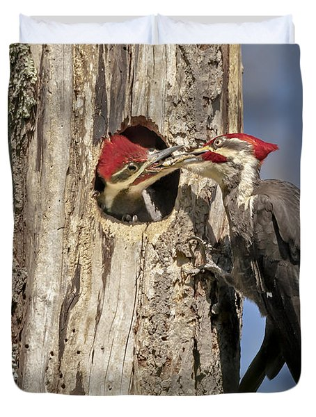 Pileated Woodpecker and Chick Duvet Cover by Susan Candelario
