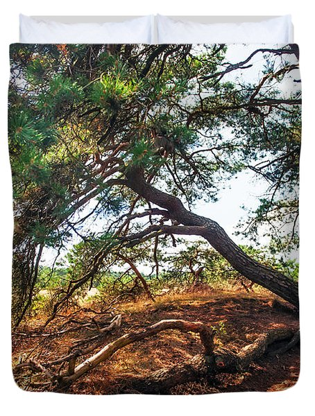 Pine Tree In Hoge Veluwe National Park 2. Netherlands Duvet Cover by Jenny Rainbow