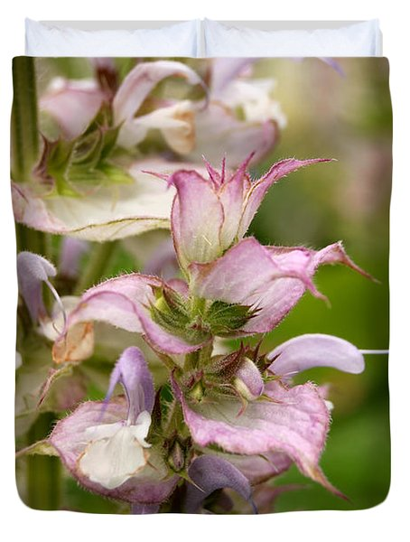 Pink Summer Sage Duvet Cover by Eva Kaufman
