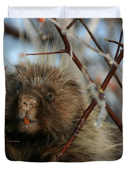 Porcupine And Berries Duvet Cover by Marty Fancy