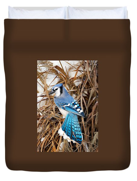 Portrait Of A Blue Jay Duvet Cover by Bill Wakeley