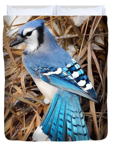 Portrait Of A Blue Jay Square Duvet Cover by Bill Wakeley