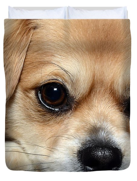 Portrait Of A Pup Duvet Cover by Lisa Knechtel