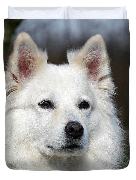Portrait White Samoyed Dog Duvet Cover by Dog Photos
