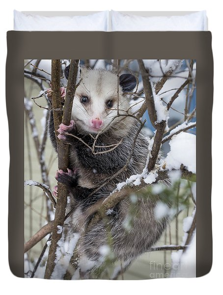 Possum Duvet Cover by Steven Ralser