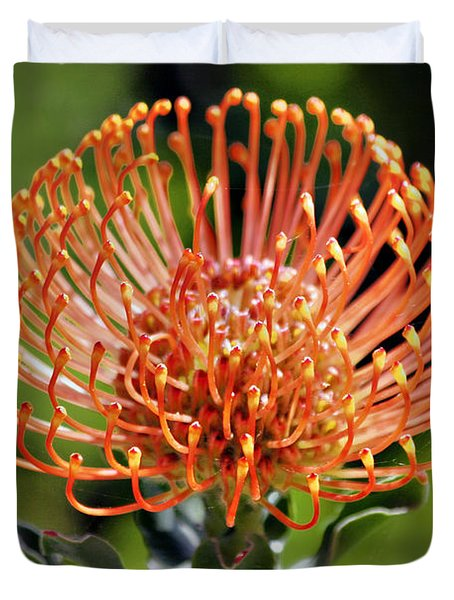 Protea - One of the Oldest Flowers on Earth Duvet Cover by Christine Till