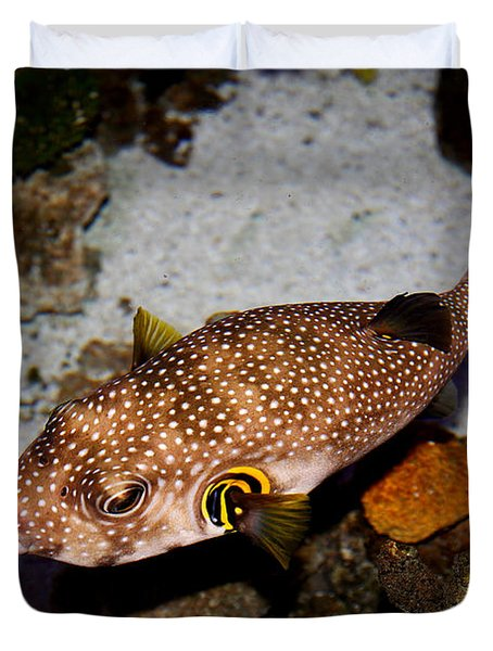Pufferfish 5D24157 Duvet Cover by Wingsdomain Art and Photography
