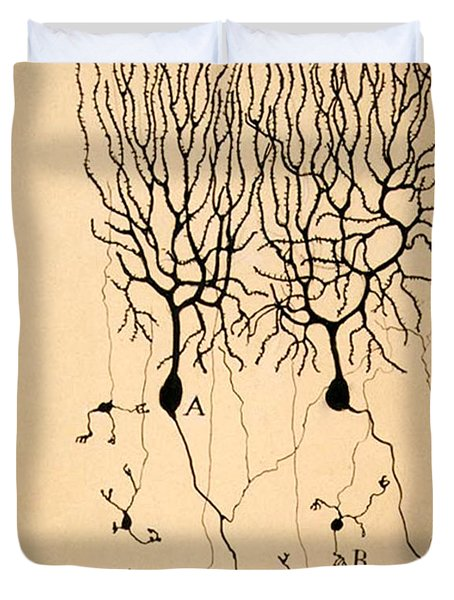Purkinje Cells By Cajal 1899 Duvet Cover by Science Source