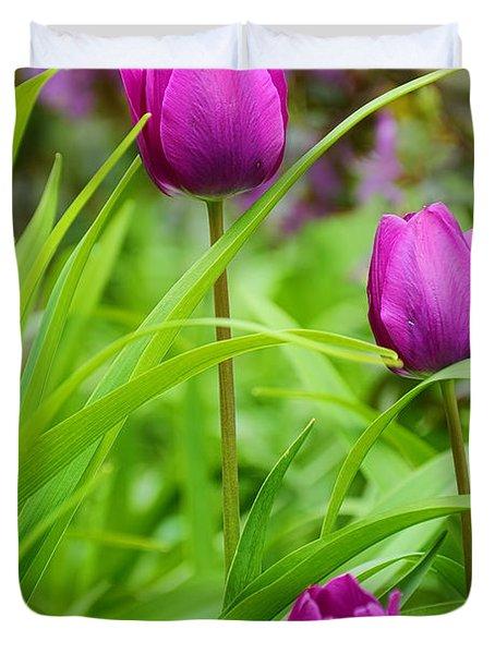 Purple Gems- Purple Tulips Rhode Island Tulips Purple Flower Duvet Cover by Lourry Legarde