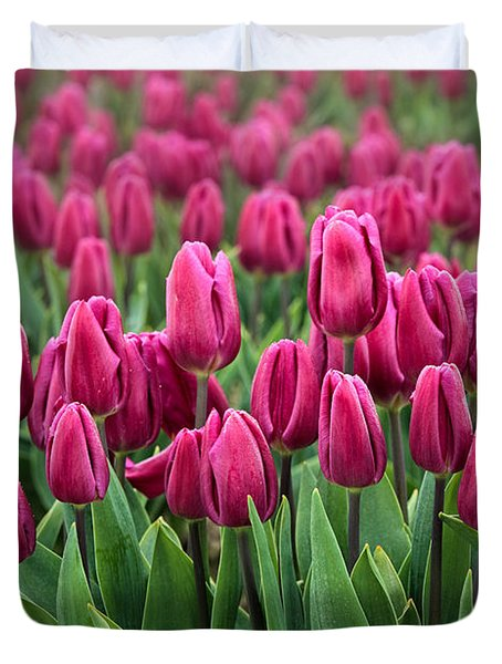 Purple Tulips Duvet Cover by Inge Johnsson
