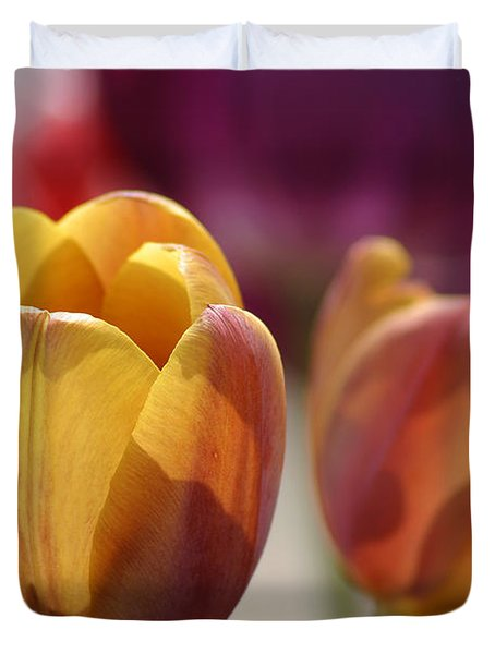 Purpleyellowtulips7016 Duvet Cover by Gary Gingrich Galleries