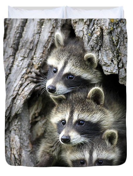 Raccoon Trio At Den Minnesota Duvet Cover by Jurgen & Christine Sohns