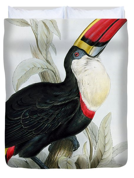 Red-billed Toucan Duvet Cover by Edward Lear