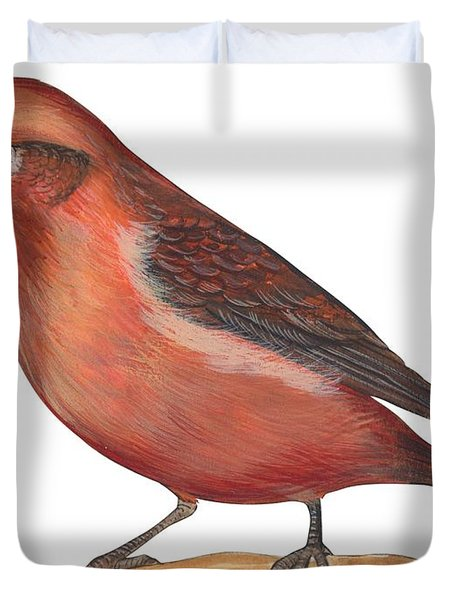 Red Crossbill Duvet Cover by Anonymous