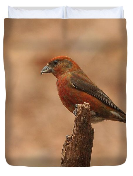 Red Crossbill Duvet Cover by Charles Owens