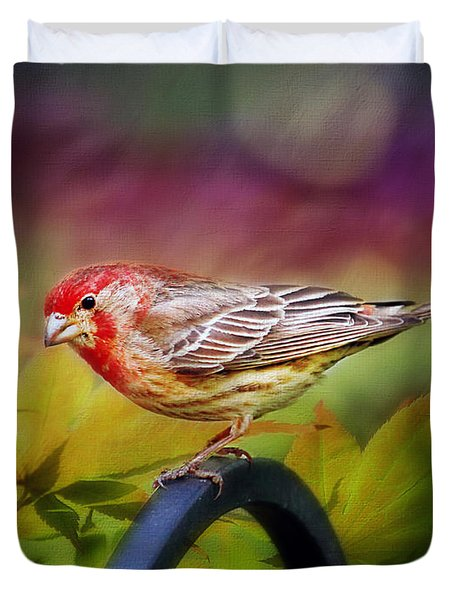 Red Finch Duvet Cover by Darren Fisher