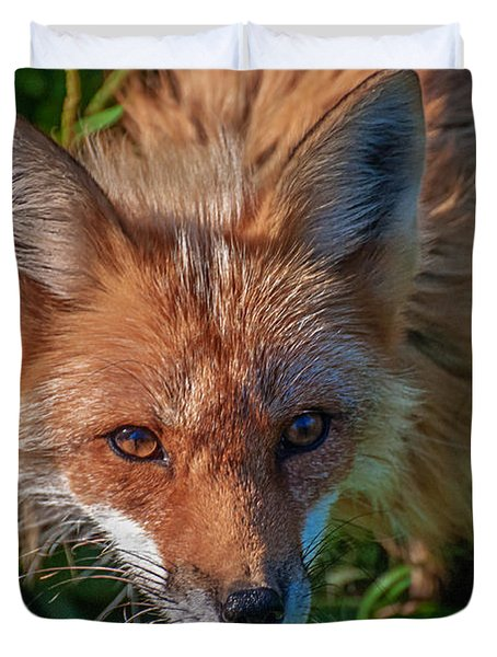 Red Fox Duvet Cover by Bianca Nadeau