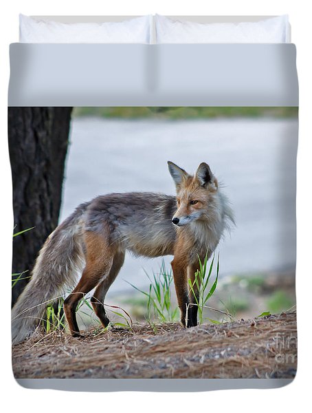 Red Fox Duvet Cover by Robert Bales