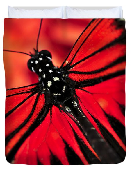 Red Heliconius Dora Butterfly Duvet Cover by Elena Elisseeva