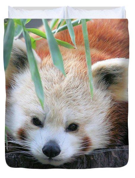 Red Panda Duvet Cover by Karol Livote