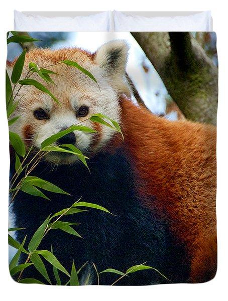 Red Panda Duvet Cover by Trever Miller