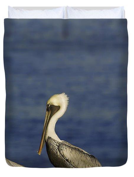 Resting Pelican Duvet Cover by Sebastian Musial