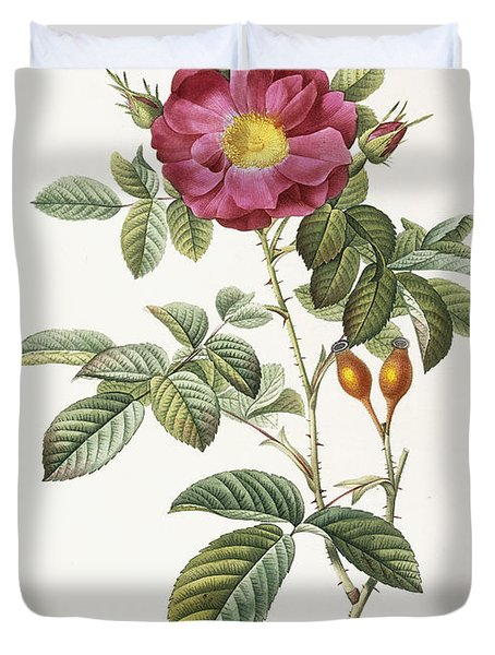Rosa Damascena Coccina Duvet Cover by Pierre Joseph Redoute