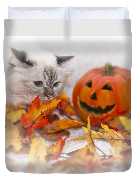 Sacred Cat Of Burma Halloween Duvet Cover by Melanie Viola