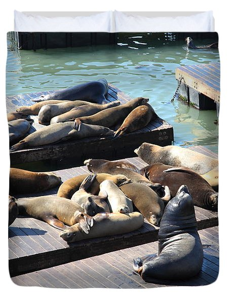 San Francisco Pier 39 Sea Lions 5D26113 Duvet Cover by Wingsdomain Art and Photography