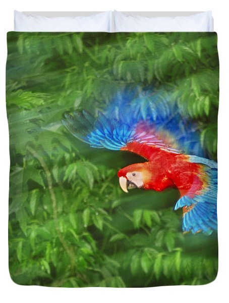 Scarlet Macaw Juvenile In Flight Duvet Cover by Frans Lanting MINT Images
