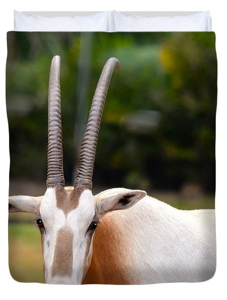 Scimitar Horned Oryx 2 Duvet Cover by Richard Bryce and Family