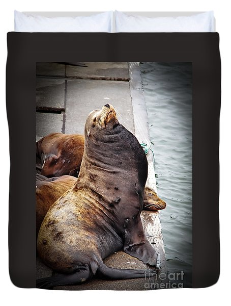 Sea Lion Duvet Cover by Robert Bales