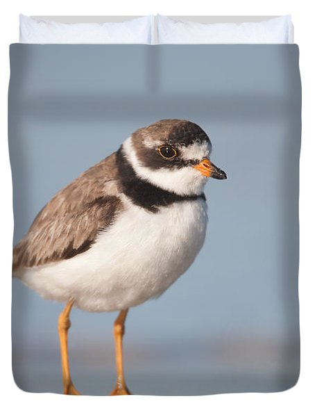 Semipalmated Plover Duvet Cover by Clarence Holmes