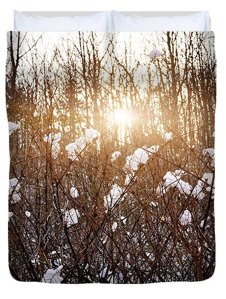 Setting sun in winter forest Duvet Cover by Elena Elisseeva