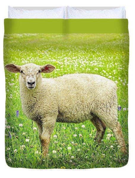 Sheep in summer meadow Duvet Cover by Elena Elisseeva