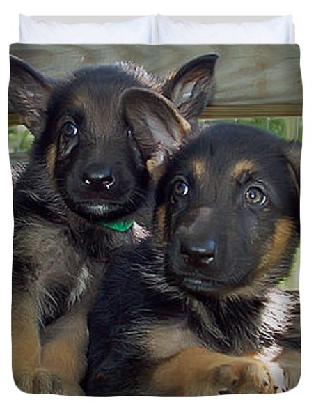 Shepherd Pups 2 Duvet Cover by Aimee L Maher Photography and Art
