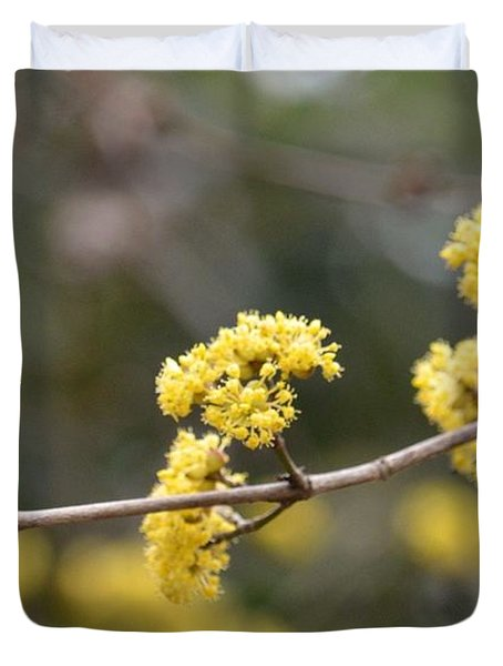 Silver Wattle In Spring Duvet Cover by Maria Urso