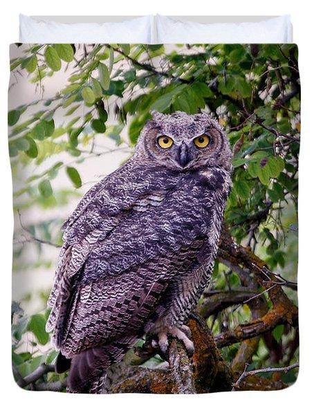 Sitting Owl Duvet Cover by Athena Mckinzie