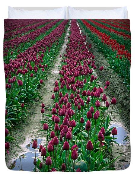 Skagit Valley Tulips Duvet Cover by Inge Johnsson