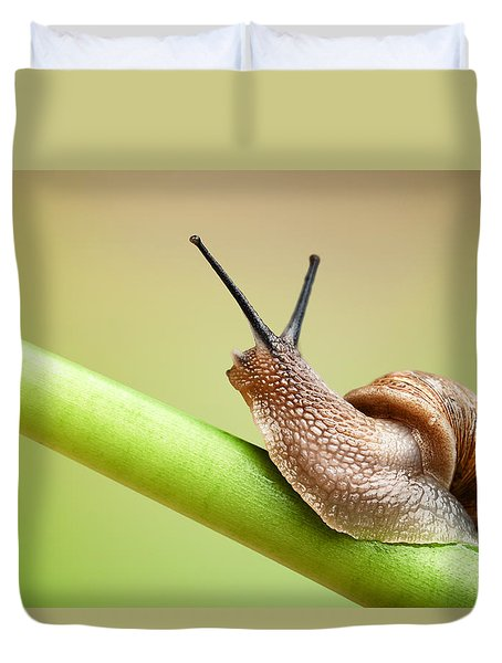 Snail on green stem Duvet Cover by Johan Swanepoel