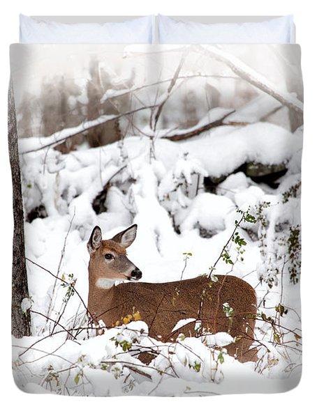 Snow Doe Duvet Cover by Karol Livote