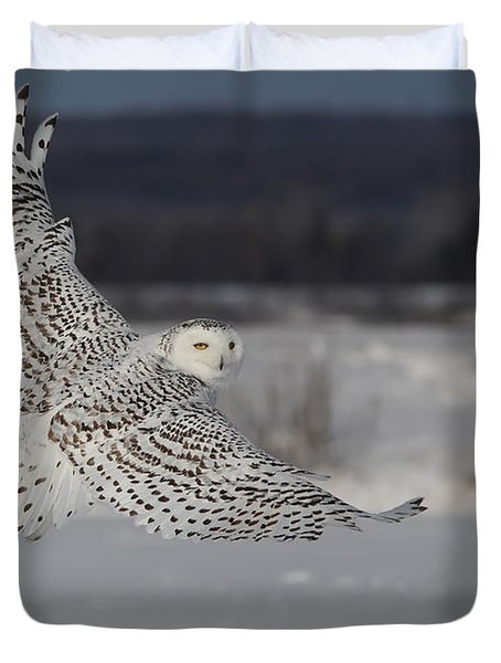 Snowy Owl In Flight Duvet Cover by Mircea Costina Photography