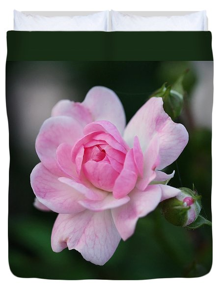Soft Pink Miniature Rose Duvet Cover by Rona Black