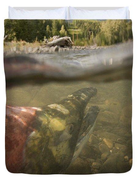 Spawned Out Sockeye Salmon In Quartz Duvet Cover by Scott Dickerson