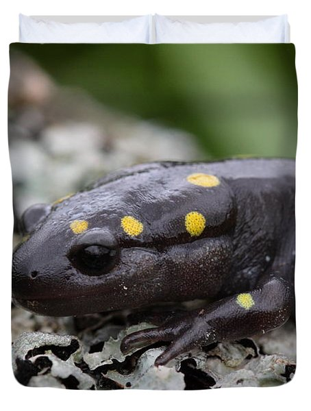 Spotted Salamander Duvet Cover by Bruce J Robinson