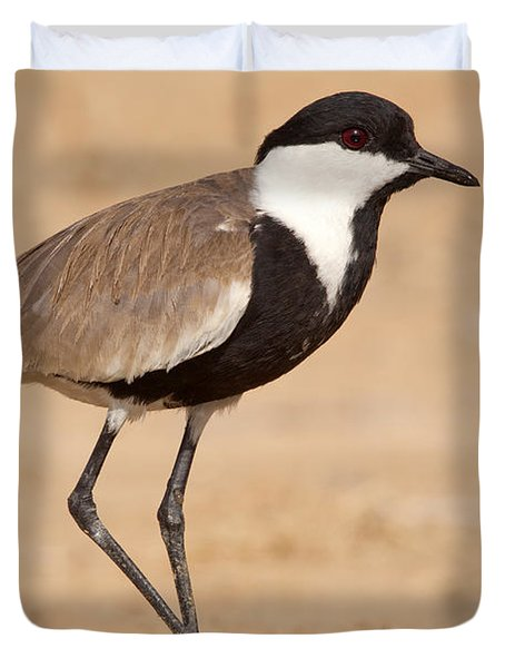 Spur-winged Lapwing Vanellus Spinosus Duvet Cover by Eyal Bartov