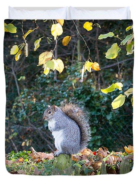 Squirrel Perched Duvet Cover by Matt Malloy