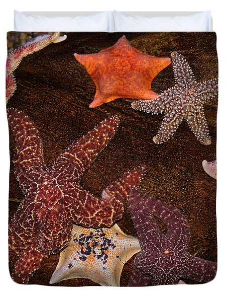 Starfish Variety 5D24133 Duvet Cover by Wingsdomain Art and Photography