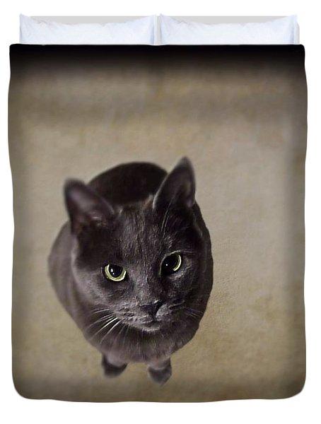 Sterling The Cat Duvet Cover by David Dehner