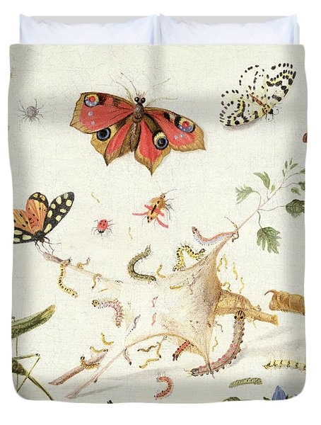 Study Of Insects And Flowers Duvet Cover by Ferdinand van Kessel